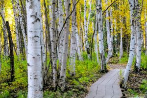 What to Expect When Moving To Fairbanks