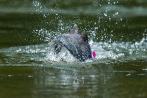 Top 10 Fishing Adventures Near Anchorage
